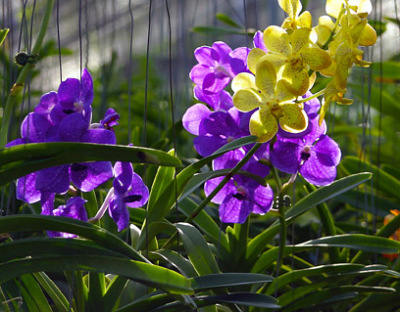 exotic orchid plants