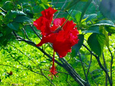 Fragile exotic flower