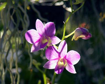 orchid nursery (1)