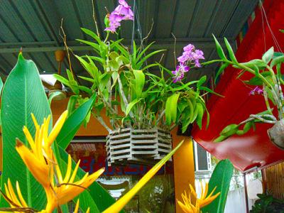orchid nursery (4)