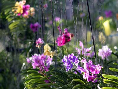 orchid nursery (6)