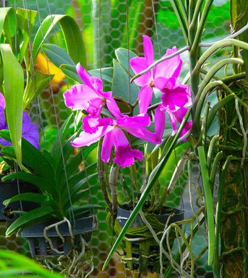 orchid nursery (7)