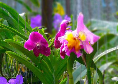 orchid nursery (9)