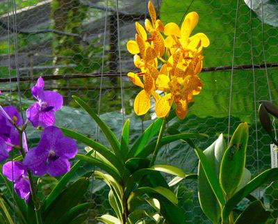 orchid nursery (10)