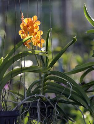 orchid nursery (11)