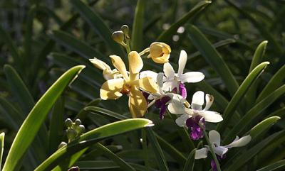 orchid nursery (12)
