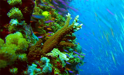 south sea corals