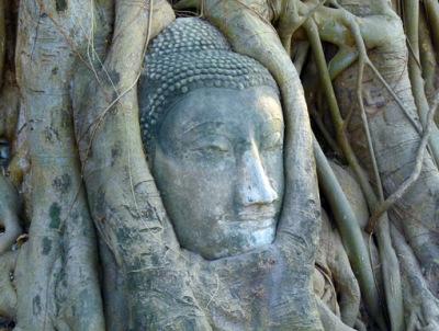 Ayutthaya Buddha Head in the tree