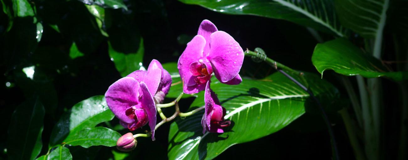 Singapore orchid garden