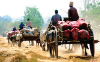 oxcarts between Yangon and Bagan