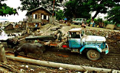 loading teak logs onto trucks by buffaloes