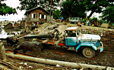loading teak logs onto trucks by buffaloes