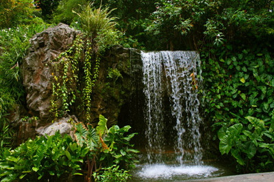 the waterfall in the garden