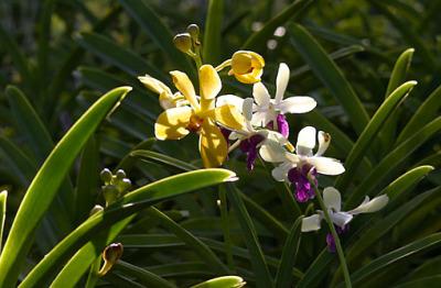 phuket orchid nursery