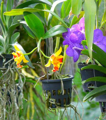 ASEAN orchid garden