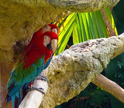 bird park and aviary