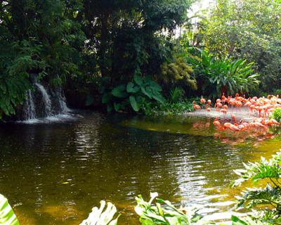 Singapore bird park and aviary