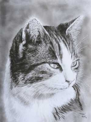 Cat dry brush Rudy Vandecappelle rmvportraitsart painting for sale
