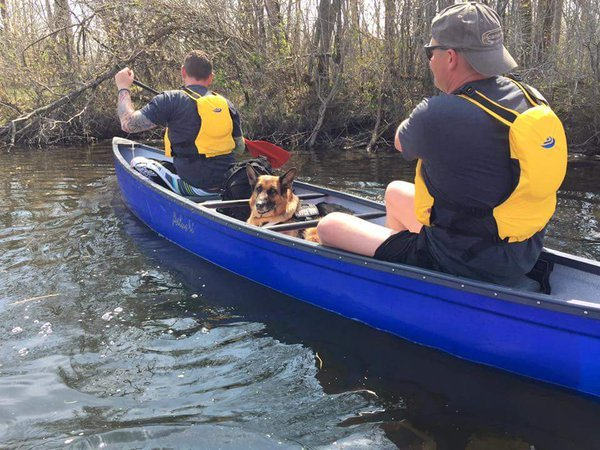centurion k9 ptsd service dogs project trauma support canoe Ruby