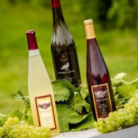 Raven's Glen Wine