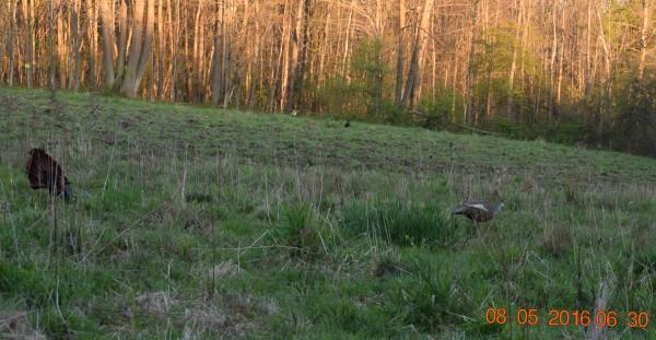 5-8-16 Morning Hunt - No Harvest