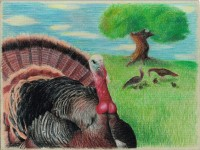 Turkey Art Contest