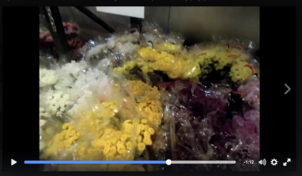 Orchids, oriental stargazer lilys, seagrass, robalini and statice flowers in the cooler at Middle Atlantic Wholesale