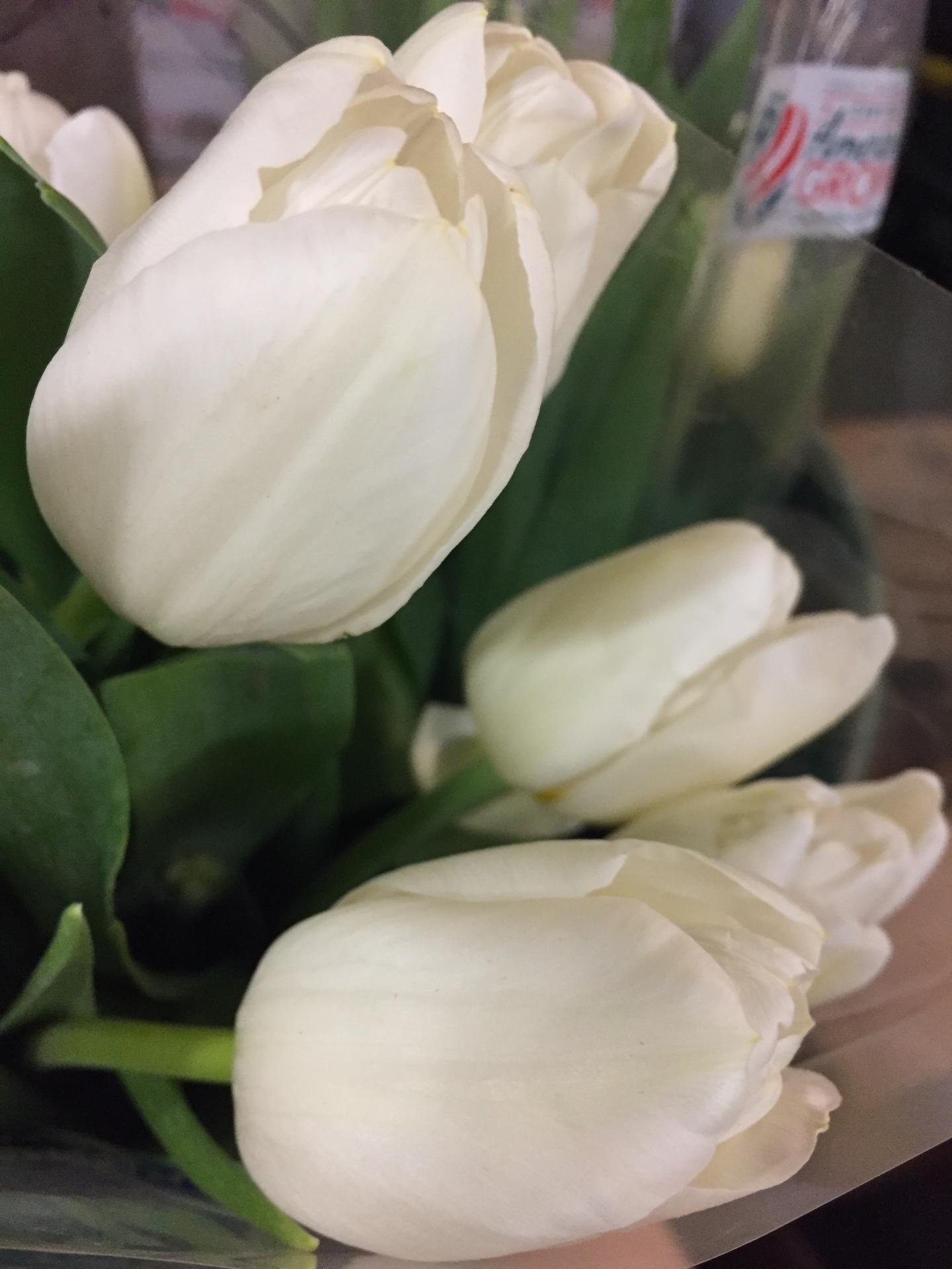 Tulip Dutch