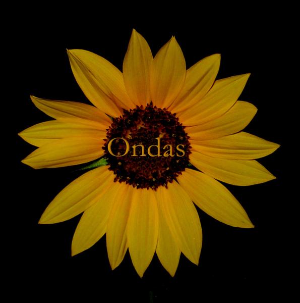 Ondas design by Flores