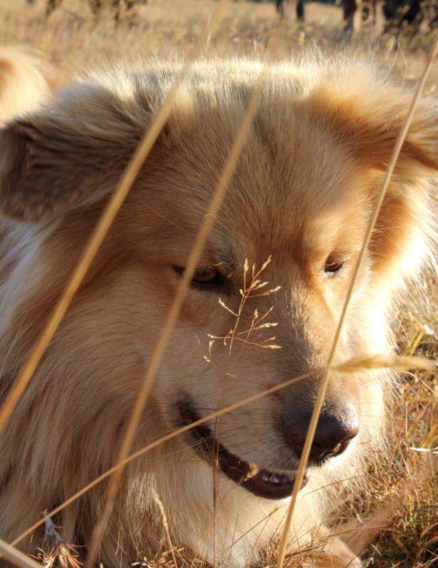 dog walking company brighton