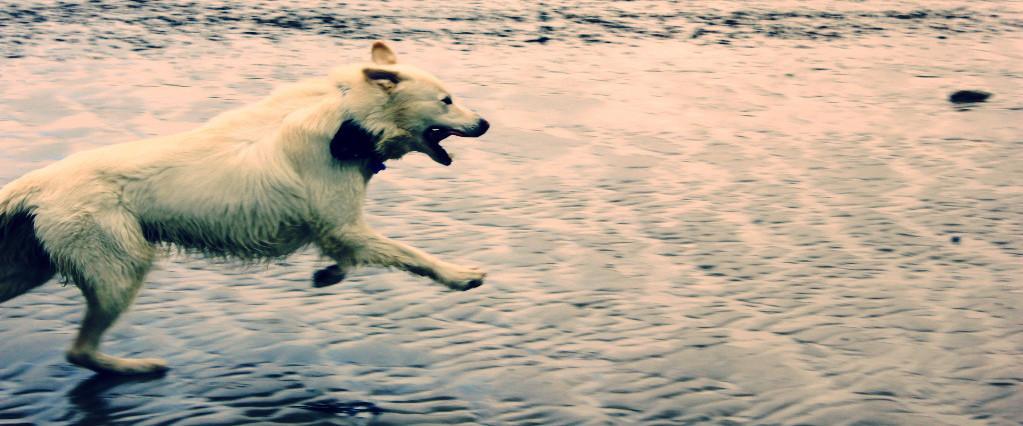 dog walking services Brighton