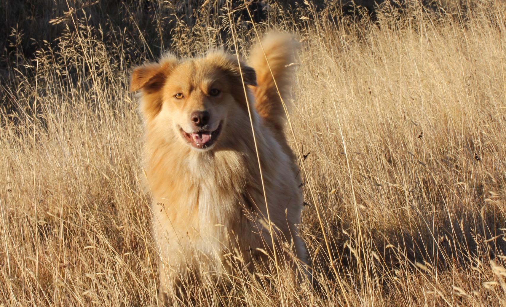 dog walkers brighton