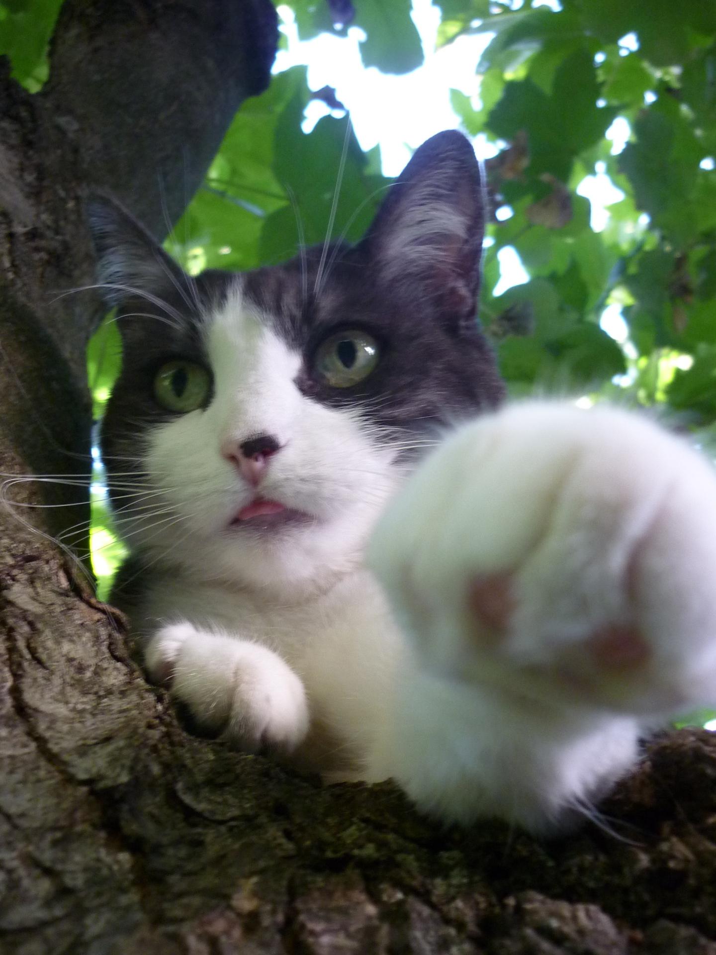 cat sitter brighton