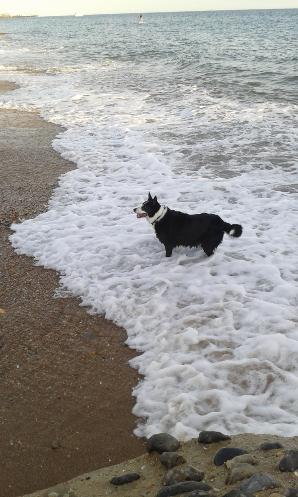 SEASIDE DOGS OF BRIGHTON AND HOVE BEACH