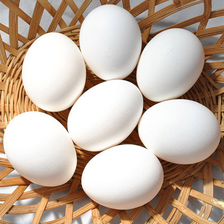 Fertilized Chicken Broiler Hatching Eggs