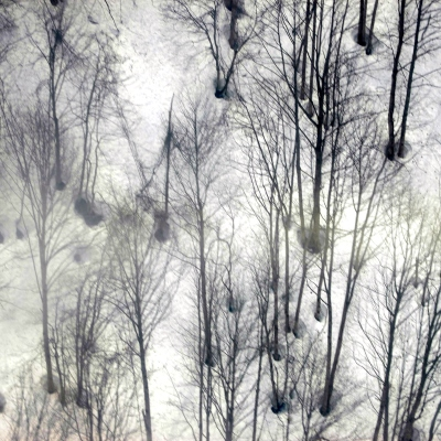 Trees in snow, arctic, ghostly