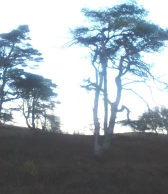 trees wildwoods forests danger