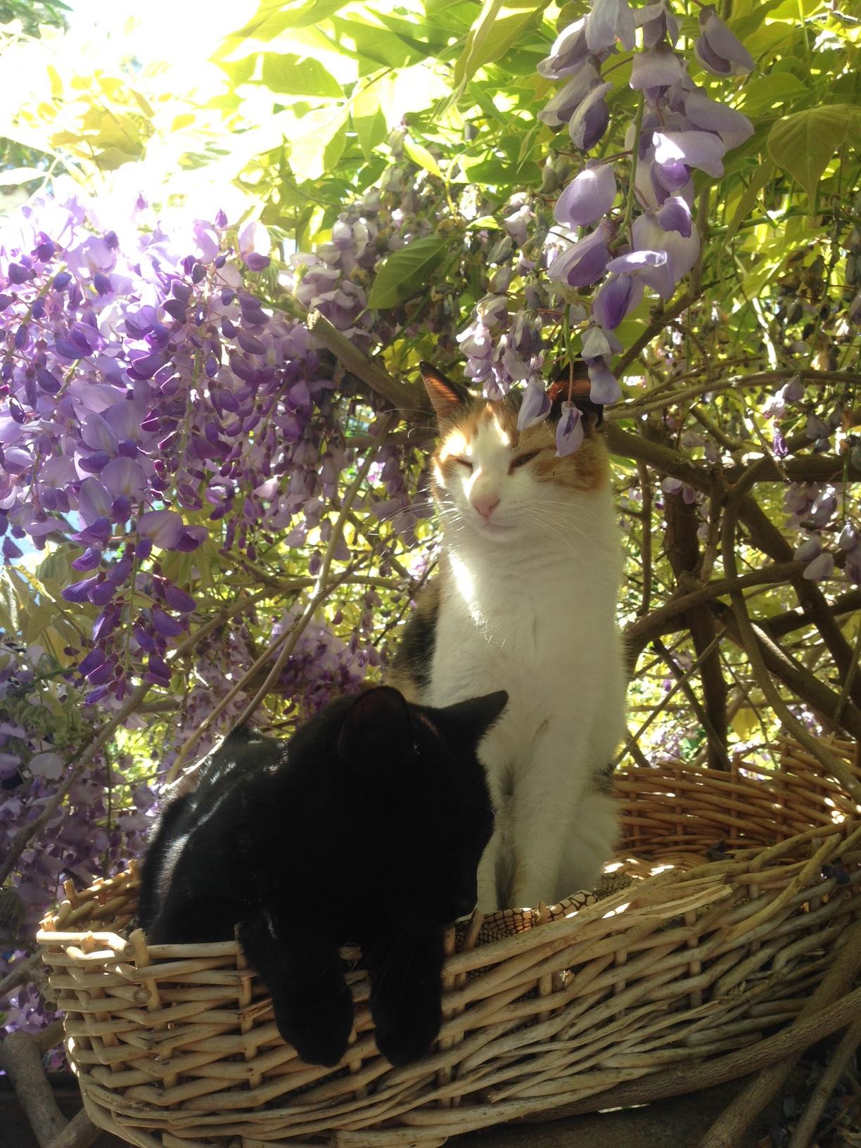 sculpture barcelona cat art service accommodations house rental artists