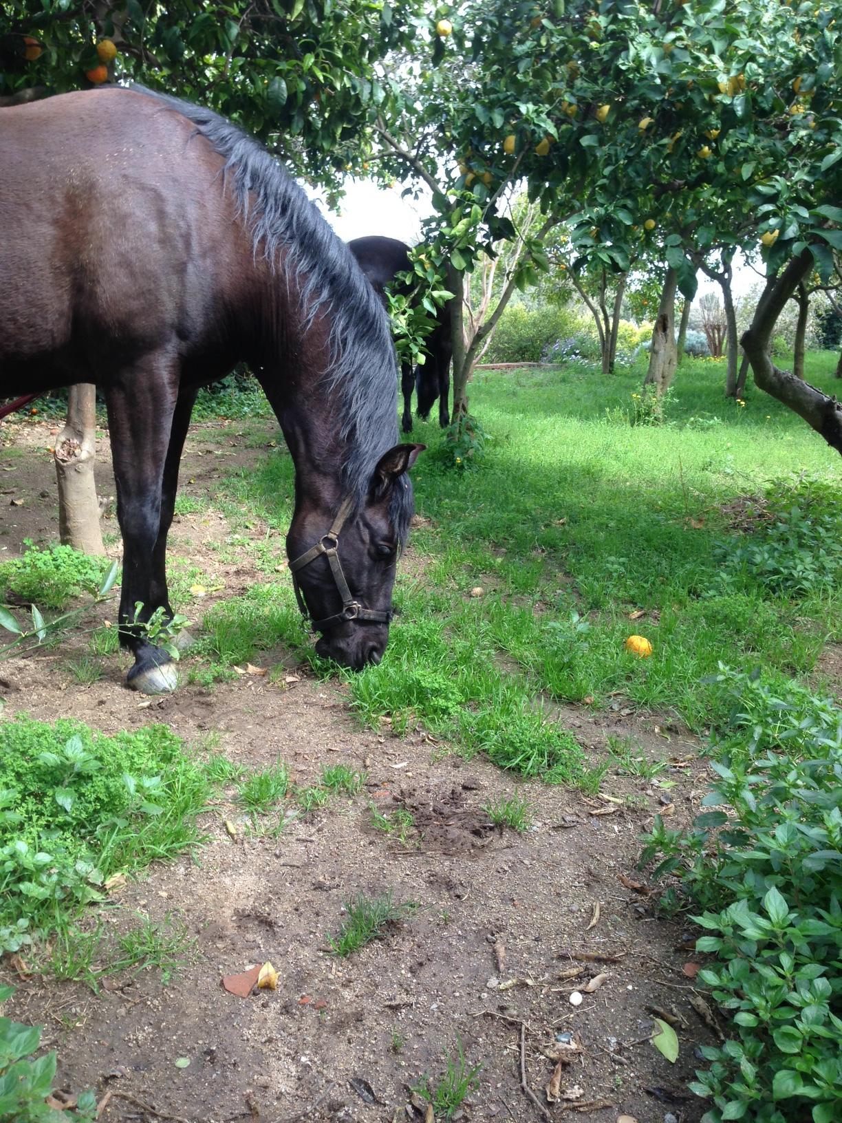 horseback riding vacation Barcelona