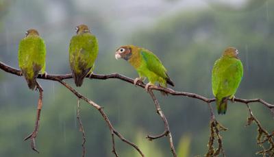 cost rica wildlife