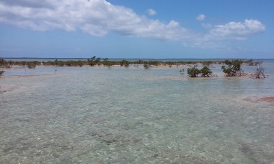 Grand Bahama Flats