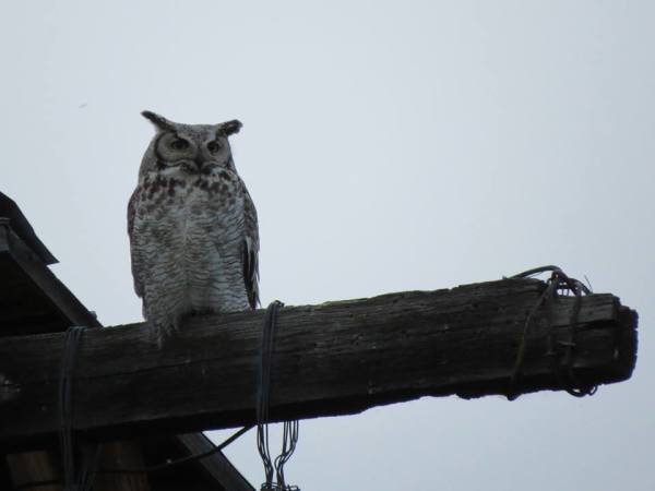 Symbolism of the Owl, For LaRae