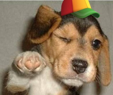 beagle puppy wearing hat