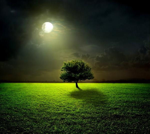 Lyme Lilli Moon