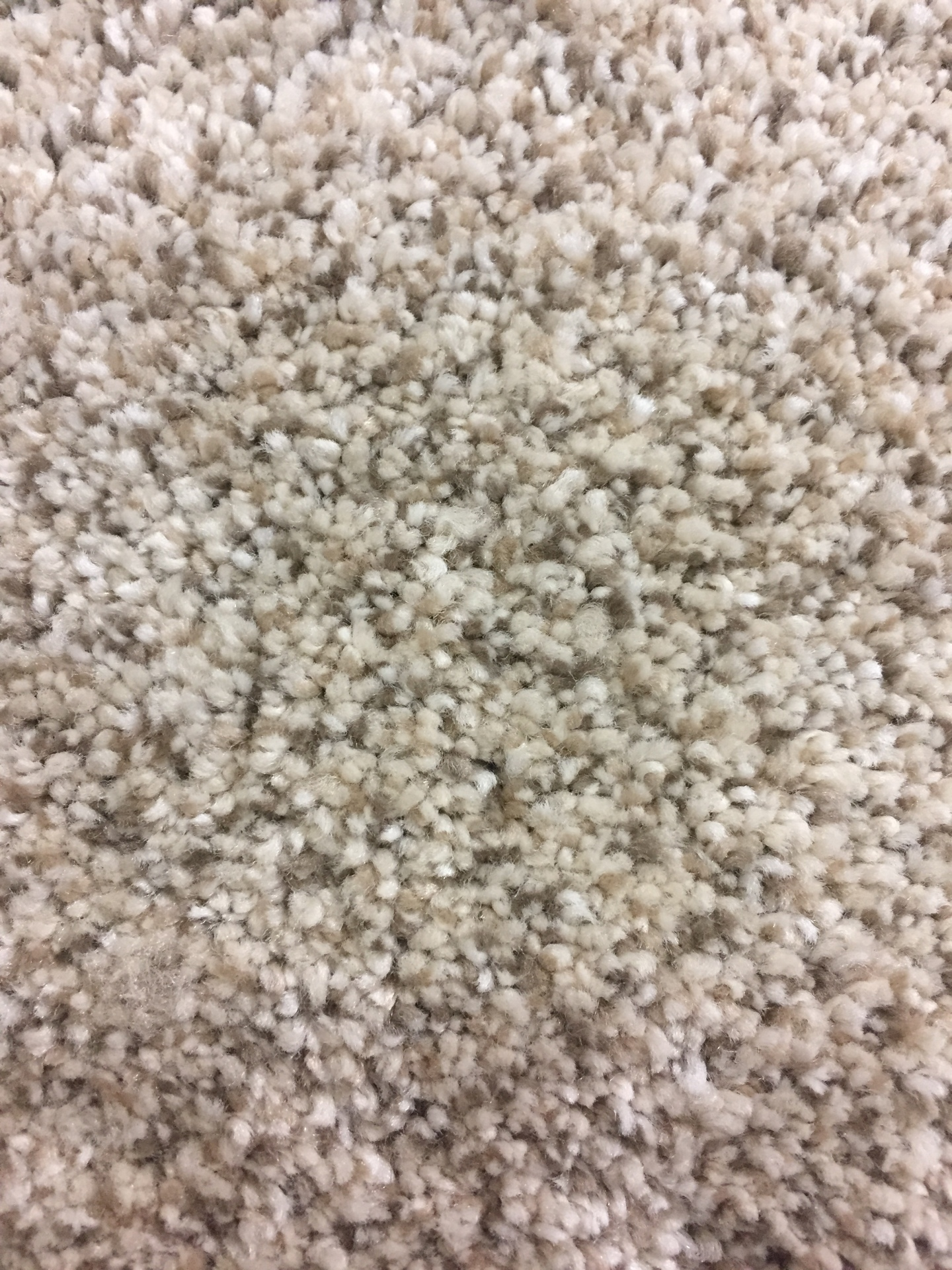 Tri State Velveteen (A5F) - $2.99 sq ft