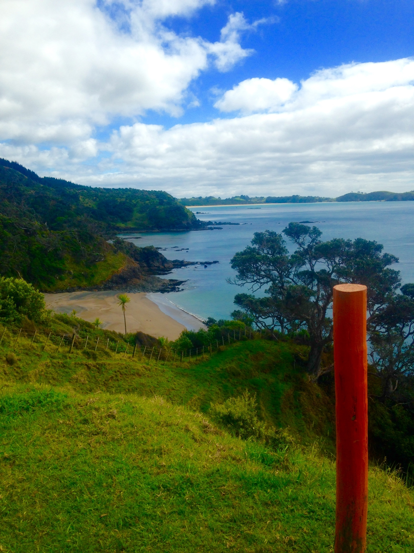 Along the Whananiki Coastal Walkway