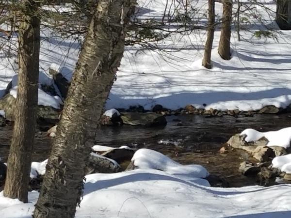 Creek in Back