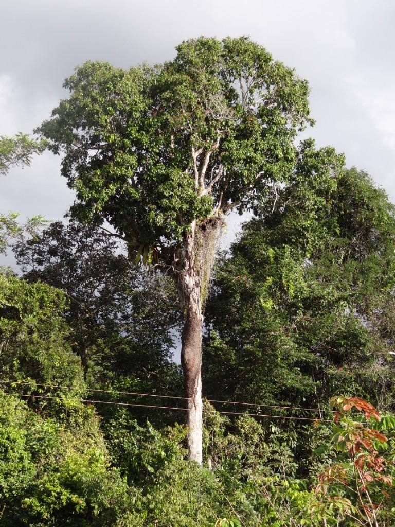 Floresta Primária - Paraíso das Águas Hotel - Bahia