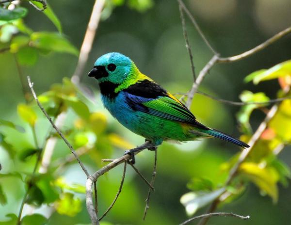 Pássaro - Paraíso das Águas Hotel - Ituberá - Bahia