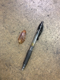 pest control- Cardinal Insect
